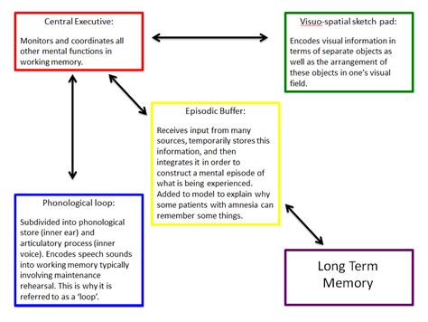 Working Memory, Models And Memories On Pinterest