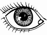 Coloring Eye Pages Printable Eyes Sheets Human Getcoloringpages Getcolorings sketch template