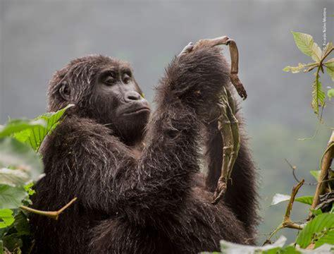 wildlife photographer   year  winners