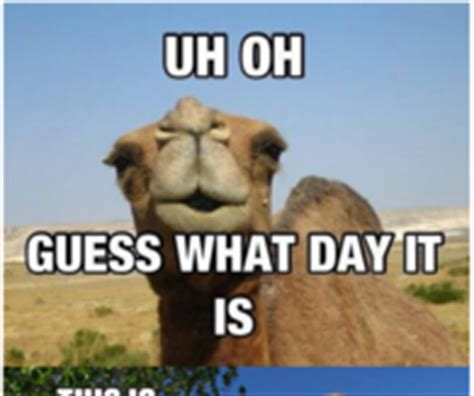 Hump Day Camel Meme - hdbd wednesday the bump
