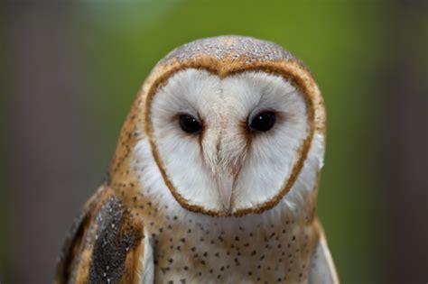 Barn Owl Box Company