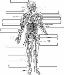 Pin By Jackie Sweet On Anatomy  U0026 Physiology