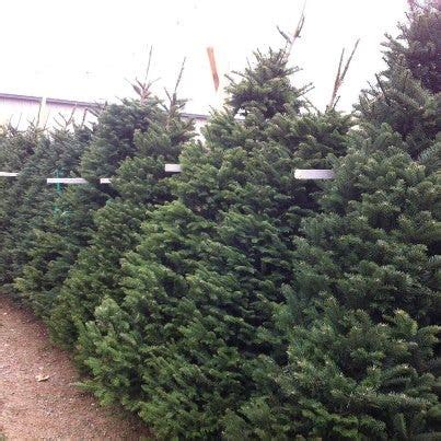christmas tree lot near me local tree lots sprouting around the area nbc right now kndo kndu tri cities yakima