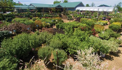 johnsons garden center locally grown landscape plants johnson s gardens