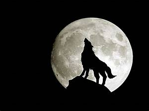 Fantasy pictures with wolfs   Barbaras Fantasy World