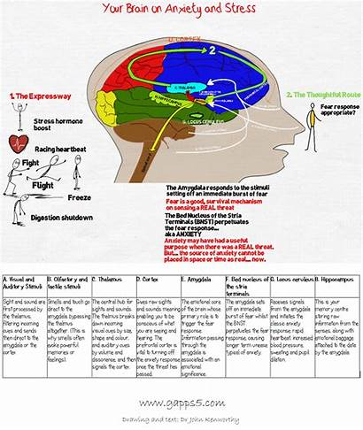 Brain Stress Anxiety Infographic Advantedge Potential Performance