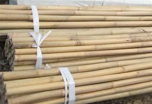 Bambus Pflege Zimmerpflanze : bambus zimmerpflanze kaufen kunstpflanze bambus in schale online kaufen otto zimmerbambus ~ Frokenaadalensverden.com Haus und Dekorationen
