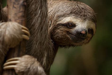 Sloth Images International Sloth Day 21 Things You Never Knew About