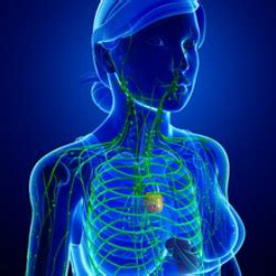 infiammazione vasi linfatici gli inibitori della formazione dei vasi linfatici result