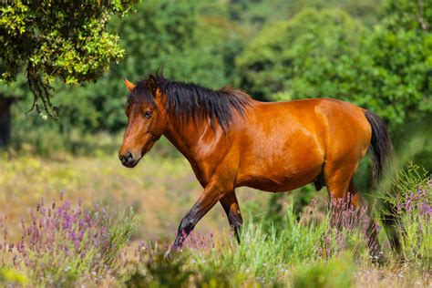 wild horses europe european wildlife rewilding grazing expand areas bank number
