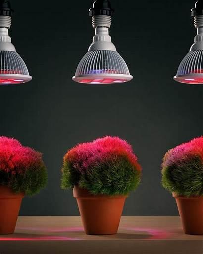 Grow Plants Lights Led Hydroponic Plant Lavahotdeals