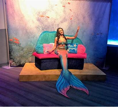 Aquarium Newport Mermaid Mermaids Pirates Themed Shark
