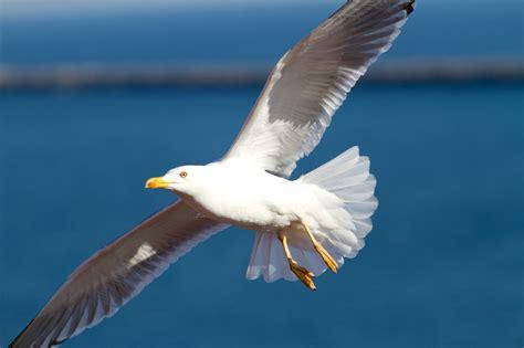 Gambar Burung Sayap Langit Burung Laut Penerbangan