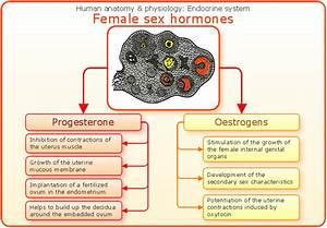 Sex Education Diagram