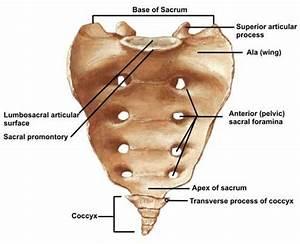 Sacral Fractures - Trauma - Orthobullets