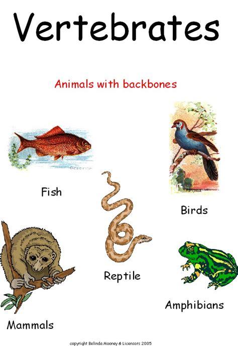 vertebrates animals animal invertebrates science vertebrate invertebrate groups vertebrata hewan classification invertebrata dan esl learningenglish vertebrados grouping cycle contoh animales