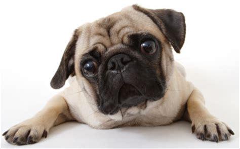 dog food allergies  toxic foods