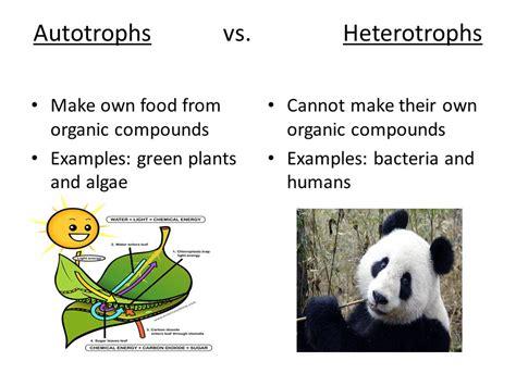 energy relationships 1 photosynthesis chloroplast