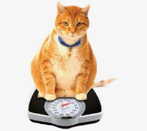 overweight cat dave s pet food for overweight cats dave s pet food