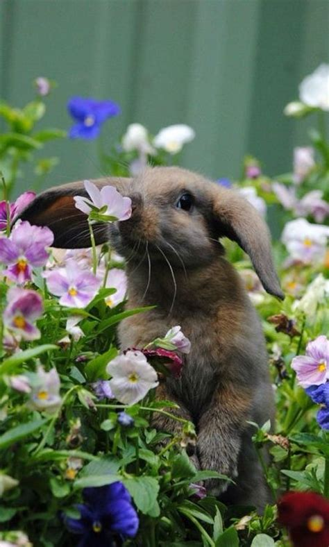 1310 best gardening with pets images on