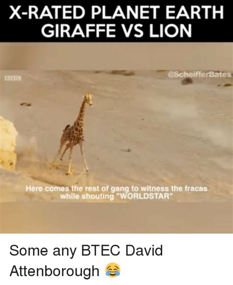Xrated Memes - funny lions memes of 2016 on sizzle dank