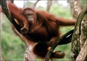 Endangered Animals Malaysia