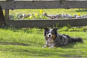 Vermieter Verbietet Hund : urlaub mit hund auf dem bauernhof ~ Lizthompson.info Haus und Dekorationen