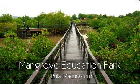 wow  obyek wisata alam hutan mangrove  desa labuhan