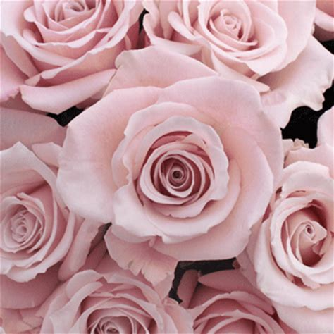 light pink flowers esther light pink roses