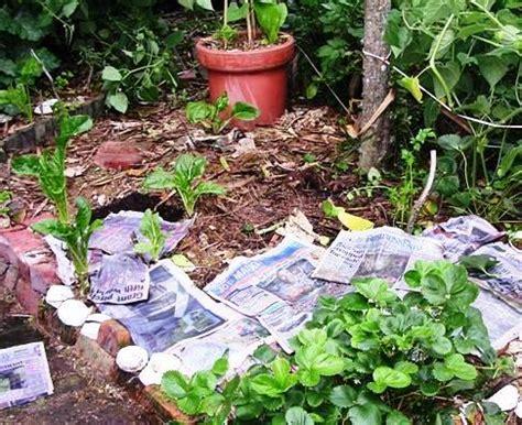 dig garden  season  adding