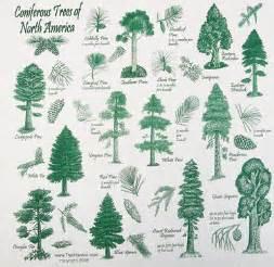 coniferous trees bandana hankie
