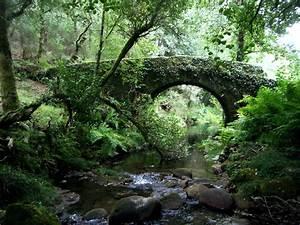 Wallpaper, Vegetation, Water, Nature, Reserve, Tree