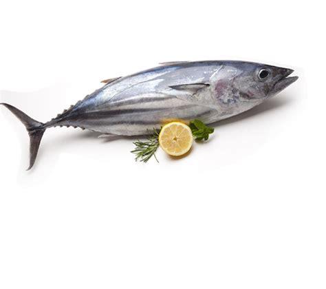 tuna fish fresh tuna fish boneless home delivery in ahmedabad