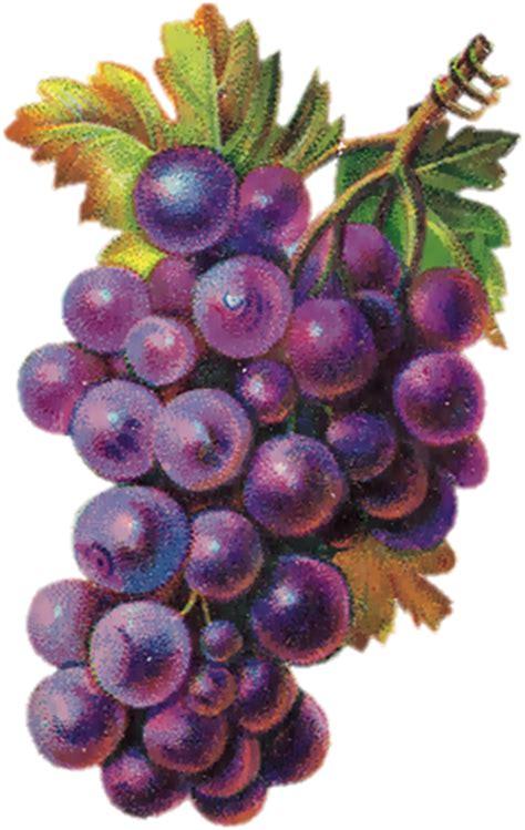 gifparadise fruit gifs