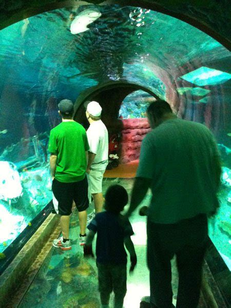 sea aquarium offers cool displays interactive geekdad