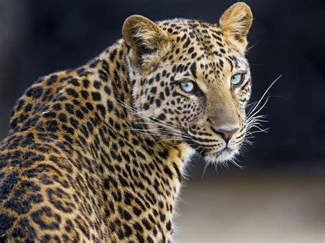 Tambako The Jaguar Talks About Big Cats Sharing Photos