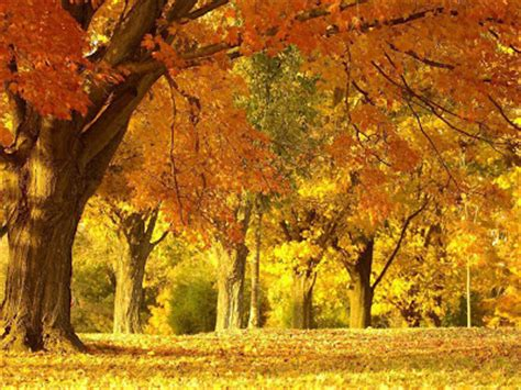 Beautiful Autumn Wallpapers by Wallpapers Beautiful Autumn Scenery Wallpapers