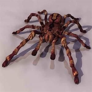 Kostenlose 3d Modelle : spider tiere 9 3d model download free 3d models download ~ Watch28wear.com Haus und Dekorationen