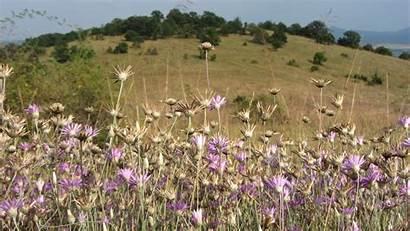 Steppe Flower Flowers Savanna Natural Wild Grass