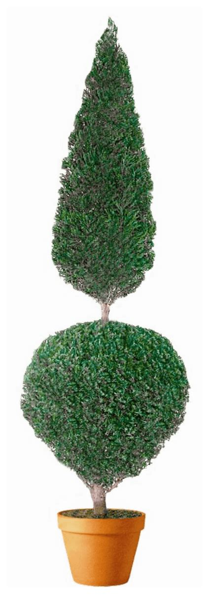 Live Preserved Cone and Ball Topiary 60 inches Tall