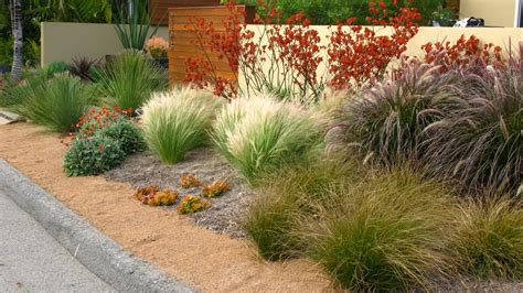 contemporary landscape with bay area drought tolerant