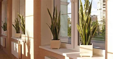 Best Indoor Window Plants by 35 Of The Best Indoor Plants For Your Home Gardening