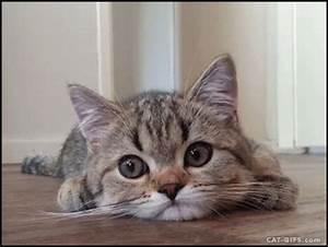 scratches 1 kitten gif | WiffleGif