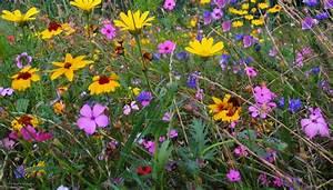 Blumen Im Sommer : sommer blueten blumen wiese ~ Whattoseeinmadrid.com Haus und Dekorationen