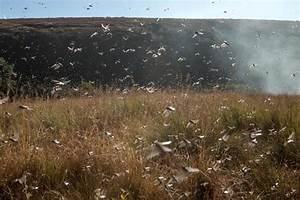 Argentina Locust Plague: Armageddon, End of Days Or ...