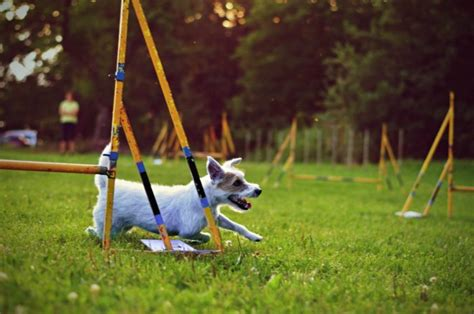 dogs cats better than why objective practical reasons trained