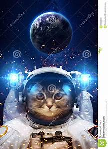 Beautiful Cat In Outer Space Stock Image - Image: 59553061