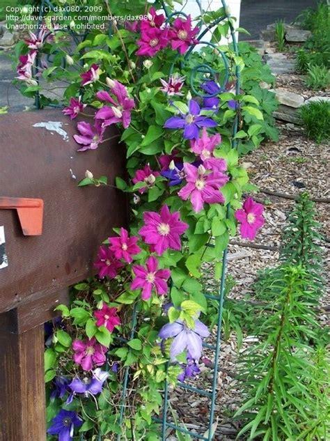 mailbox landscaping ideas beginner landscaping dax