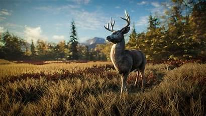 Wild Call Deer Thehunter Hunter Nature Curious