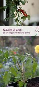 Tomaten Balkon Kübel : tomaten richtig in k bel pflanzen urban gardening garten garten pflanzen pflanzen ~ Yasmunasinghe.com Haus und Dekorationen